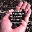 画像1: ニカラグア カサブランカ パカマラ ナチュラル (1)